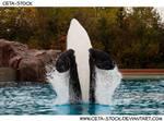 Orca Jump 6