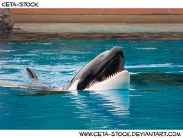 Orca 2 by Ceta-Stock