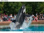 Orca Jump 7
