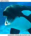 Orca Mouth 1