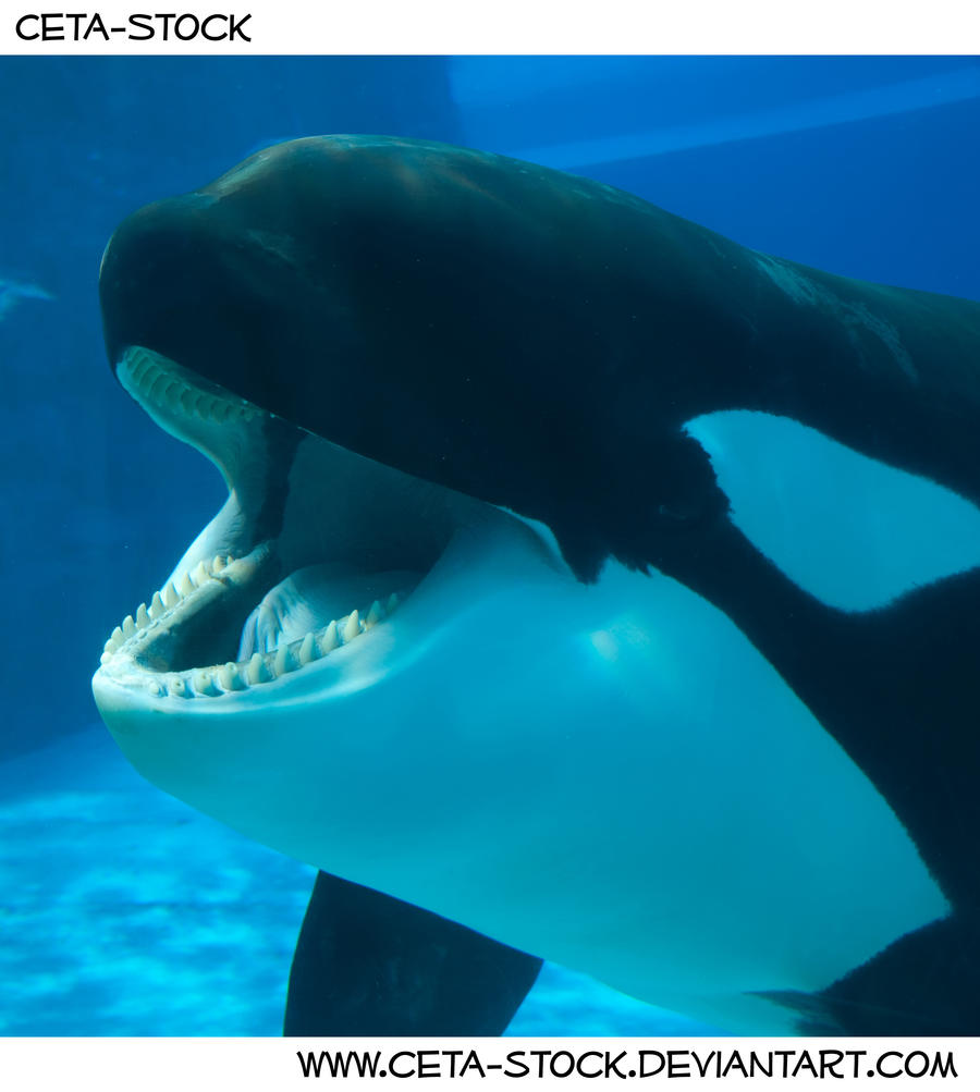 Related keywords suggestions for orca mouth for Ponteggio ceta dwg