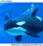 Orca Underwater 12
