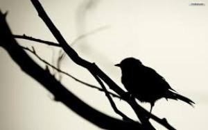 AskAlicebird's Profile Picture
