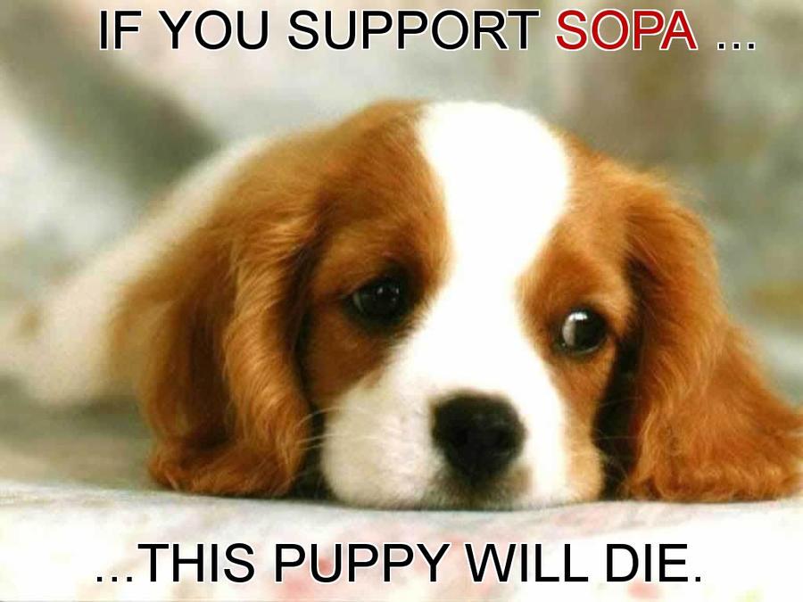 SOPA PUPPY by DolphinRagefarts