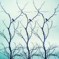 Three Y's, Birds by Markus43