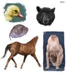Creature skins