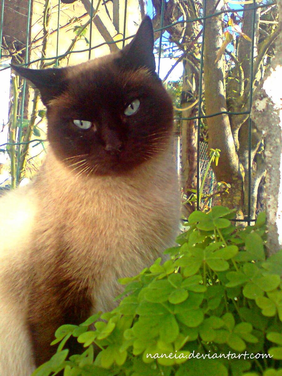 Cat Portrait 2 by Naneia