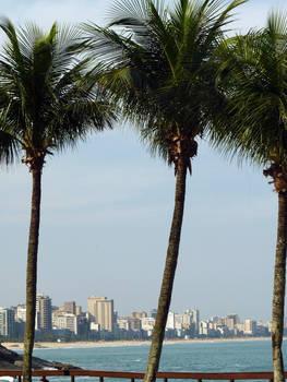 palm trees of rio