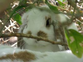Cute Bunny by jellybean400
