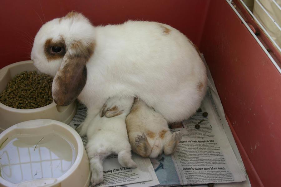 Mommy Bunny by jellybean400