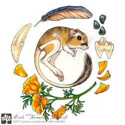 Desert Treasures - Kangaroo Rat by thornwolf