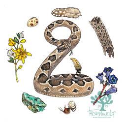 Desert Treasures - Rattlesnake