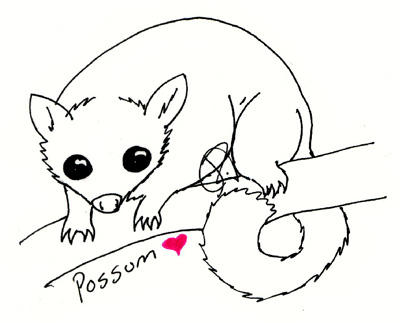 possum coloring pages for kids - photo#31