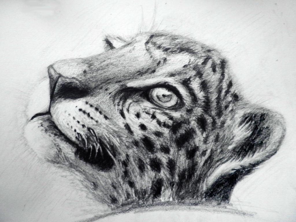 Sooper Deviant's Jaguar Cub by TJ-Scorpio88