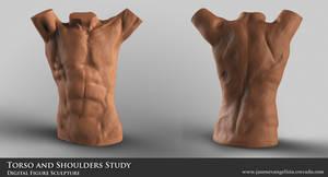 Male Torso and Shoulder Study