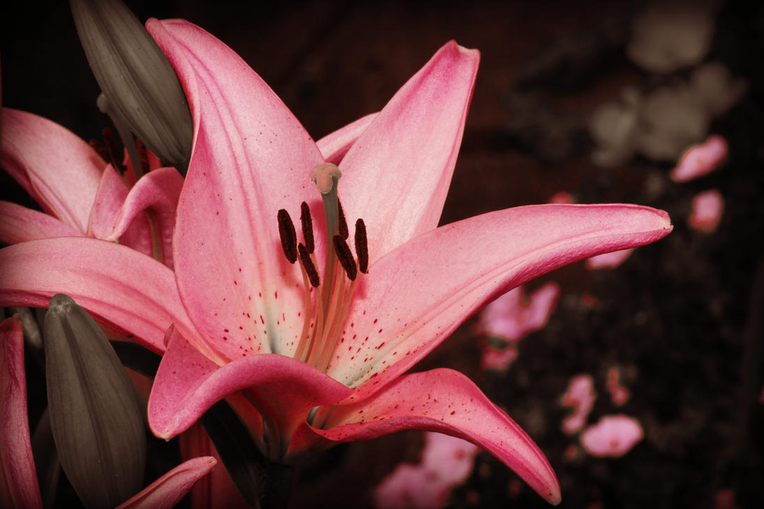 Pink Flower by PascalsPhotography