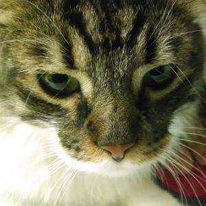 batcat1212's Profile Picture