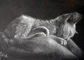 furry treasure by Lotkass