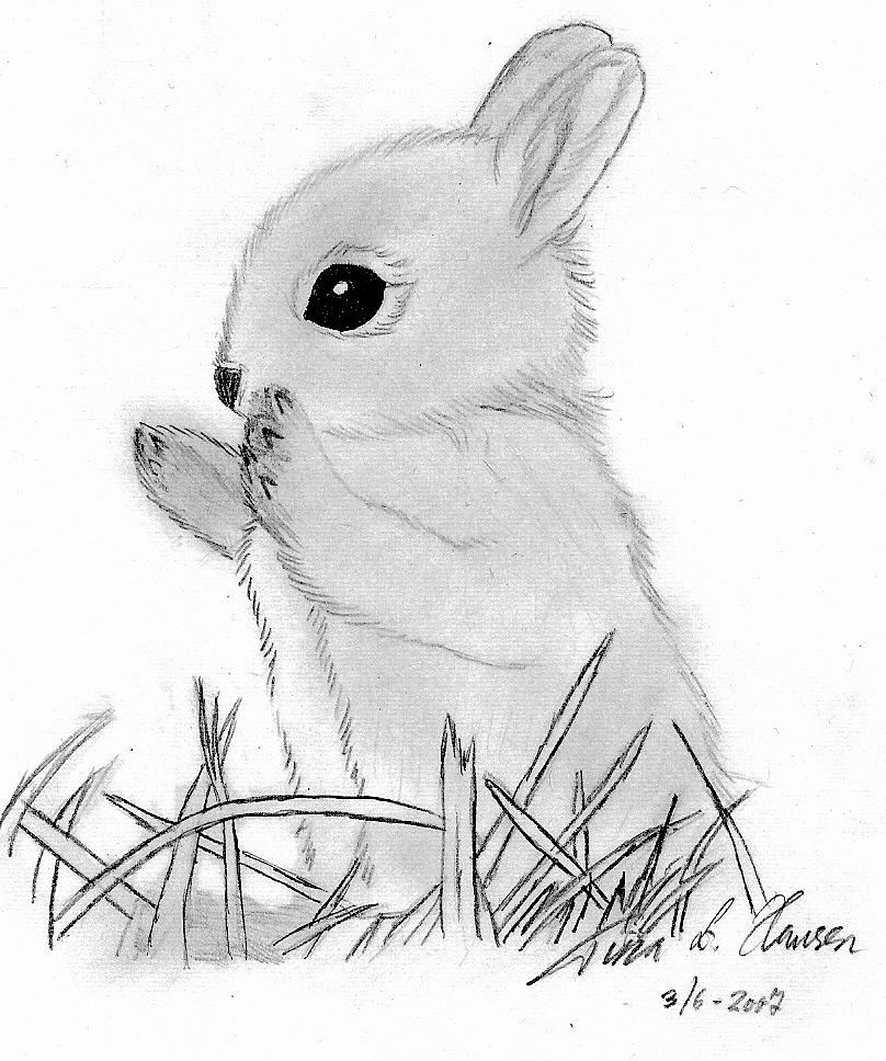 baby rabbit drawing