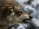 Wolf portrait 2008