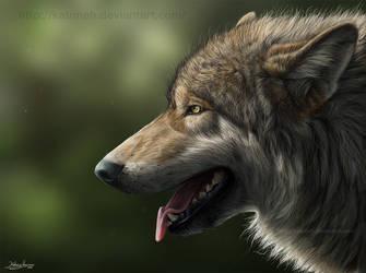 Wolf portrait 2011 by KatrineH