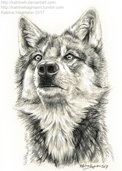 Another wolf study