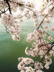 Mizunoue Sakura