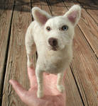 Custom Dog Portrait, Needle Felted Dog Sculpture