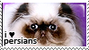 I :heart: persians by corda-stamps