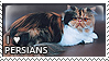 I :heart: persians II by corda-stamps