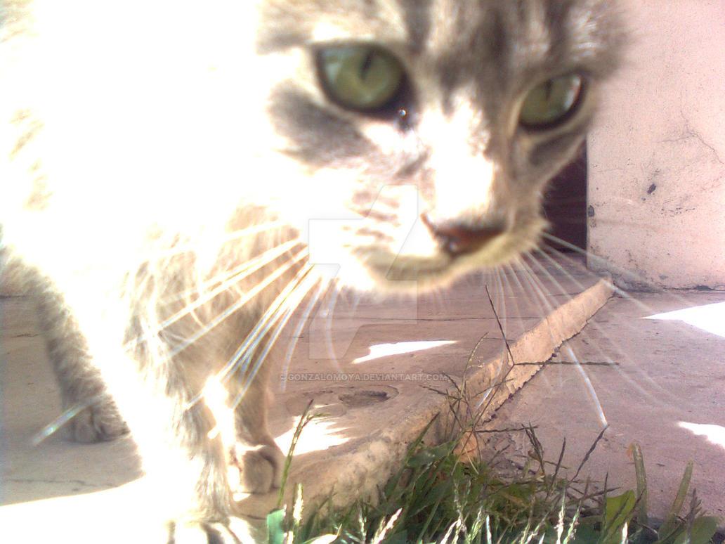 ojos de gato by gonzalomoya