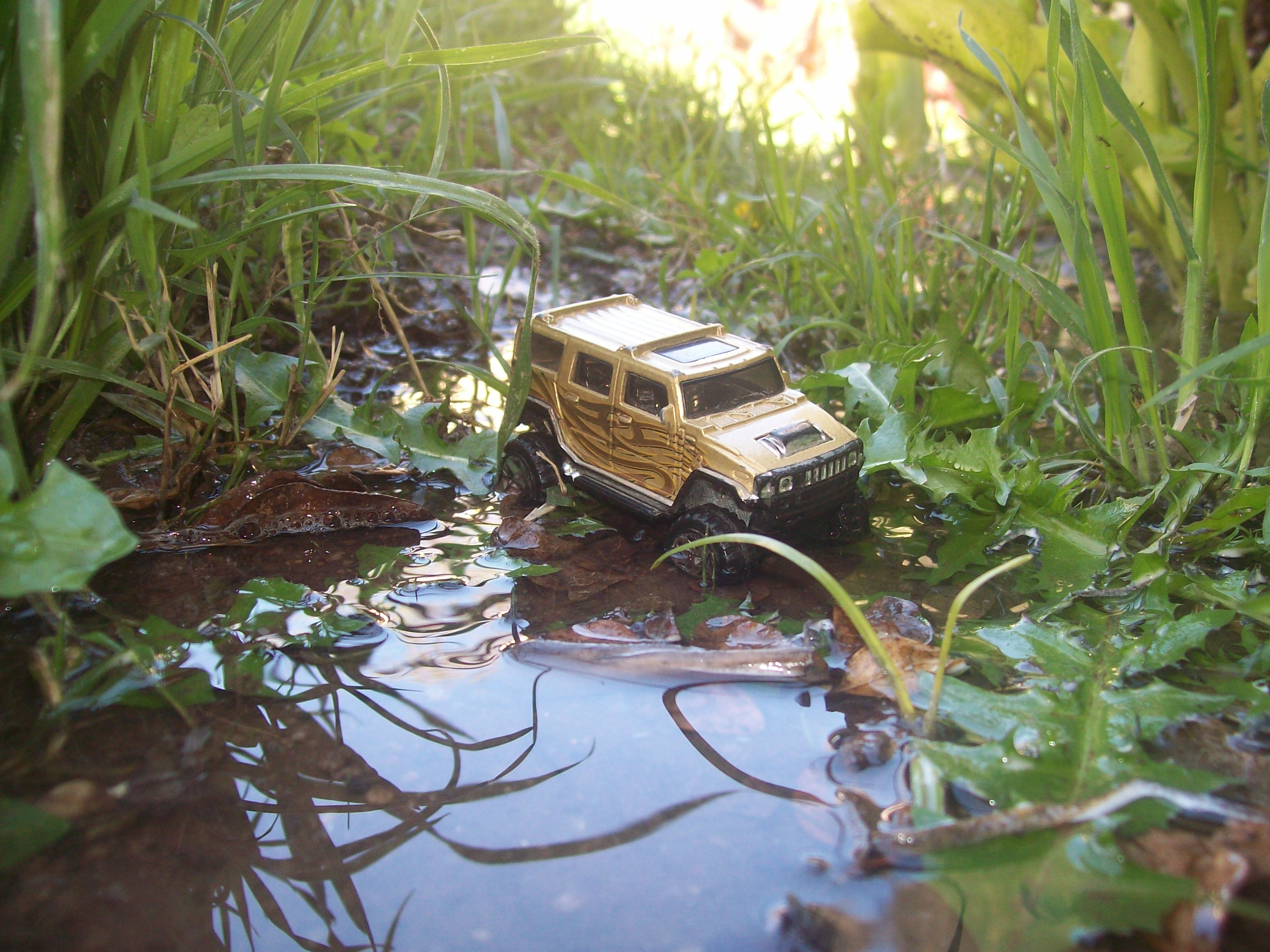 auto en la selva by gonzalomoya