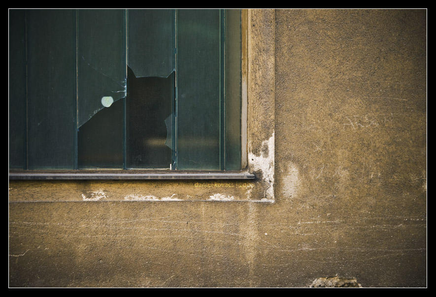 The housecat by mister-kovacs