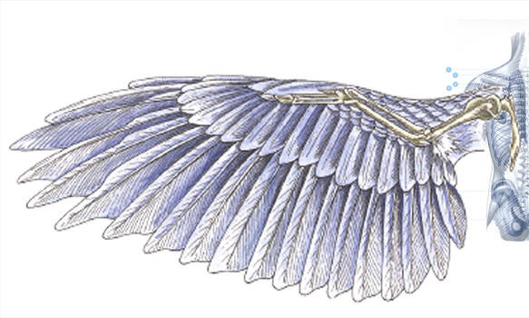 Wing template - detail