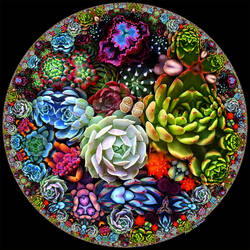Circle of Succulents by bryceguy72