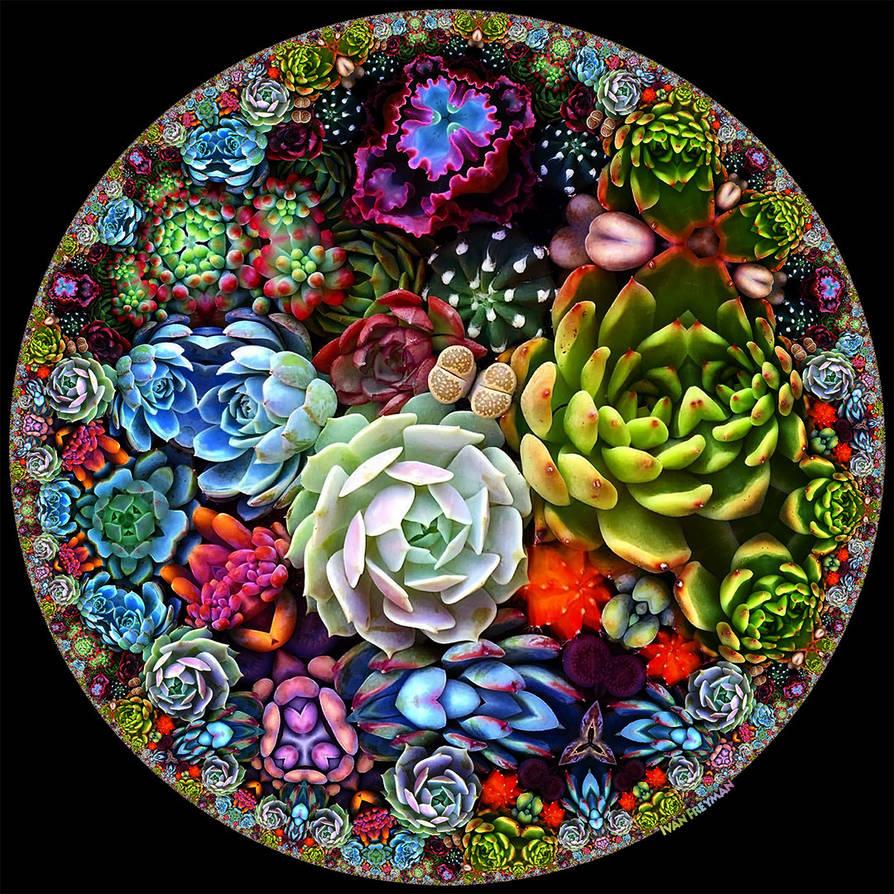 Circular Succulents by bryceguy72