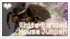 Stamp- White-Banded House Jumper by DarylsChupacabra