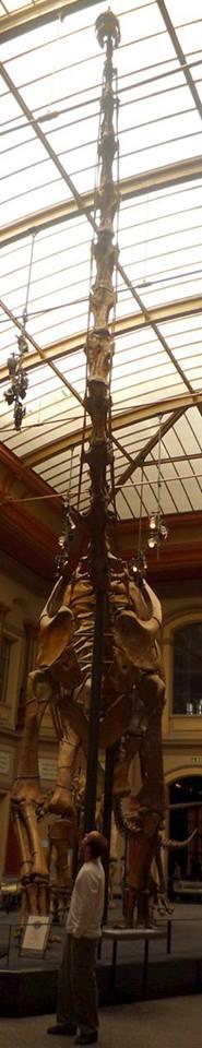Giraffatitan (Brachiosaurus) by Tobias-Kilian
