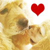 doggie avatar 002 by shetanka