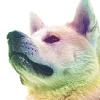 doggie avatar 003 by shetanka