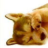 doggie avatar 004 by shetanka