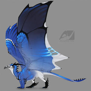 Dragon design: blue jay