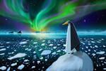 Antarctic Solitude