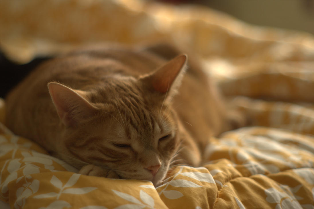Sleepy Kitty II by Ennev