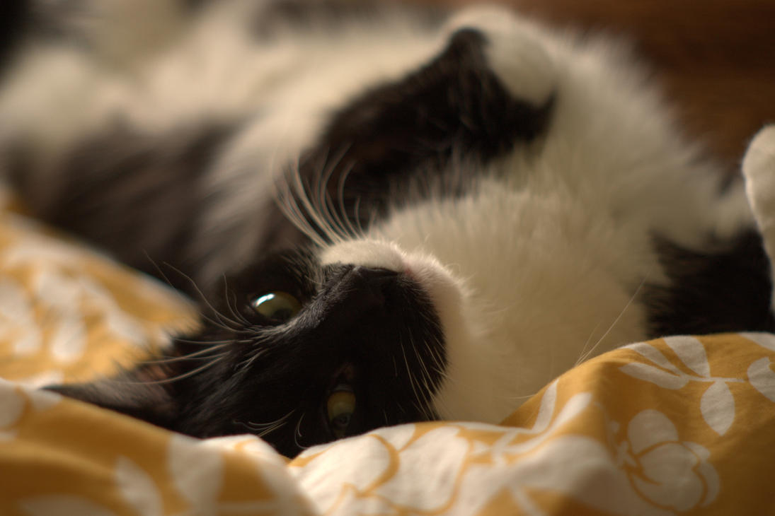 Sleepy Kitty IV by Ennev