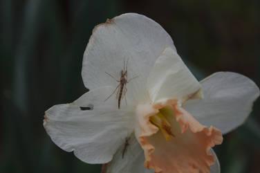 Butcher flies on flower
