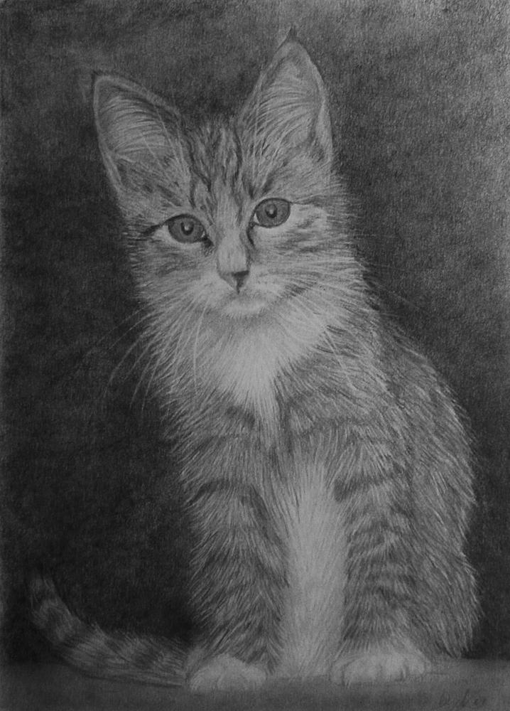 Kitty by evionn