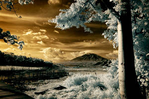 infra red landscape by ferrysetiawan