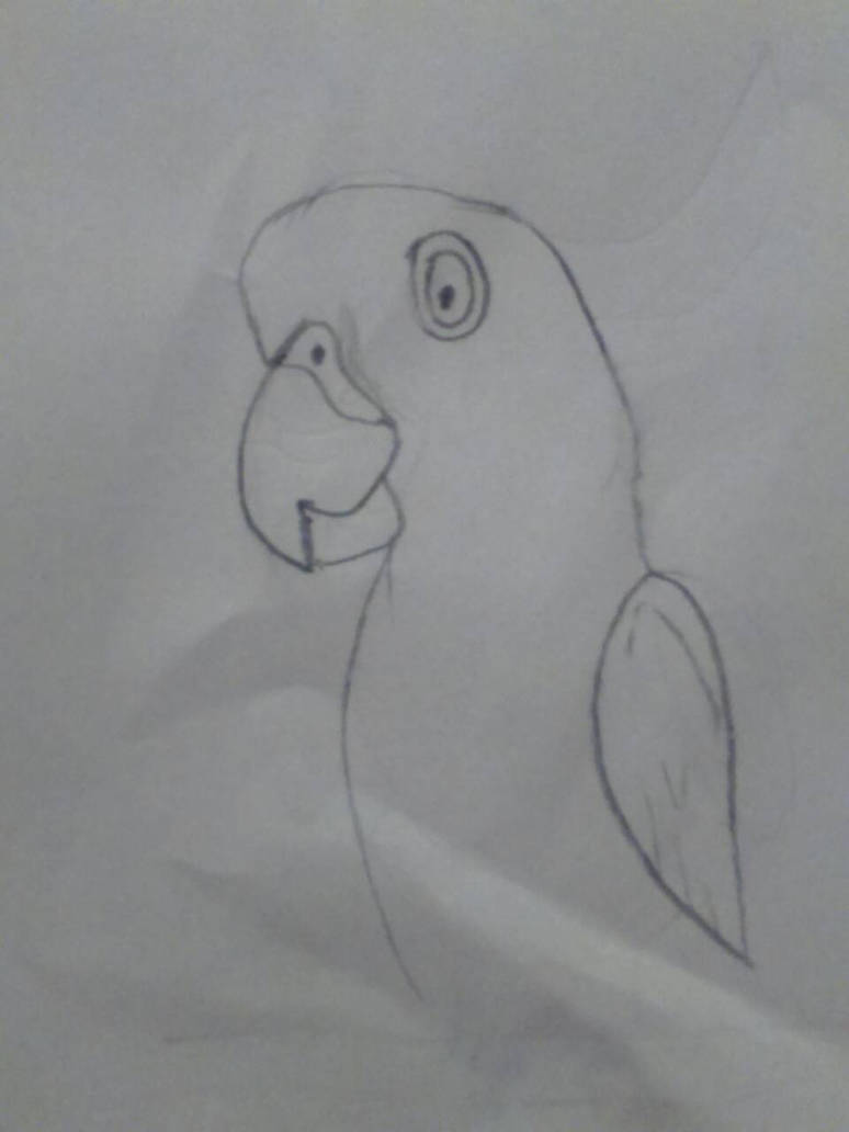 simple parrot by karim-wtf