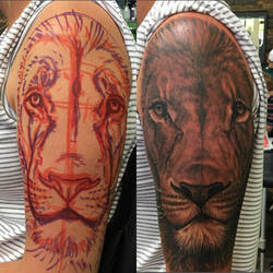 Lion by optimuspint